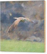 Kestrel Flying Wood Print