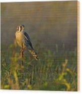Kestrel In Meadow Wood Print