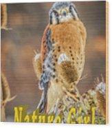 Kestrel Nature Wear Wood Print