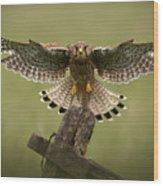Kestrel On Final Approach Wood Print by Andy Astbury