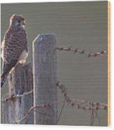Kestrel On Rustic Fence Wood Print