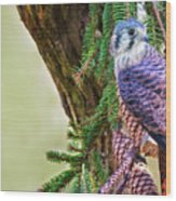 Kestrel On The Cones Wood Print