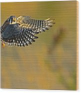 Kestrel Takes Flight Wood Print