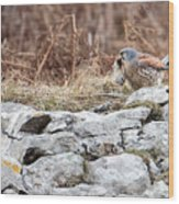 Kestrel With Prey Wood Print