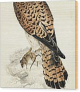 Kestril, Female Wood Print
