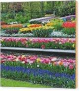 Keukenhof Tulips Ornamental Garden  Wood Print