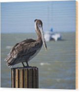 Key Largo Florida Pelican Yacht Wood Print