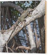 Key West Iguana In Mangrove 3 Wood Print