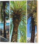 Key West Palm Triplets Wood Print by Susanne Van Hulst