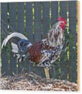 Key West Rooster 2 Wood Print