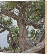 Kiawe Tree Wood Print