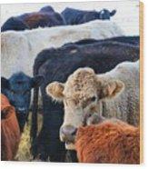 Kibler Valley Cows Wood Print