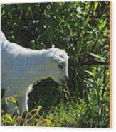 Kid Goat In Bushes Wood Print