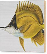 Kikakapu Wood Print