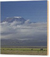 Kilimanjaro With Elephants Wood Print