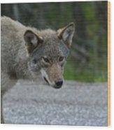 Killarney Coyote Wood Print