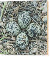 Killdeer Eggs Wood Print