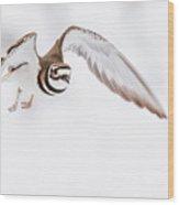 Killdeer In Flight Wood Print