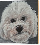 King Cavalier And Toy Poodle Mix Wood Print