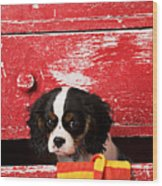 King Charles Cavalier Puppy  Wood Print