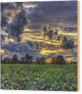 King Cotton Sunset Art Statesboro Georgia Wood Print