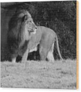 King Of Beasts Black And White Wood Print