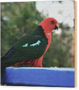 King Of The Parrots Wood Print