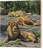 King Of The Pride Wood Print
