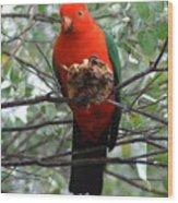 King Parrot Wood Print