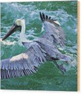 King Pelican Wood Print