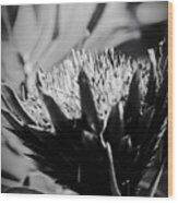 King Protea Exotic Tropical Flowers Wood Print