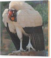 King Vulture 1 Wood Print