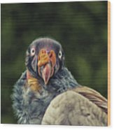King Vulture Wood Print