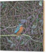 Kingfisher. Wood Print