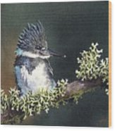Kingfisher II Wood Print