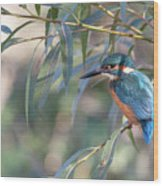Kingfisher In Willow Wood Print