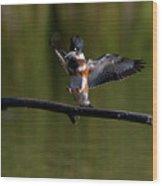Kingfisher Landing Wood Print