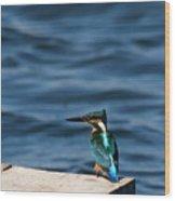 Kingfisher On The Dock Wood Print