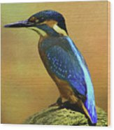 Kingfisher Perch Wood Print