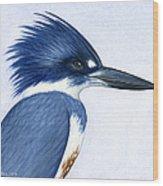 Kingfisher Portrait Wood Print