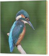 Kingfisher Watching Below Wood Print