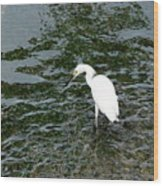 Kingston Jamaica Egret Wood Print