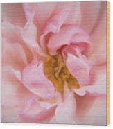 Kinsale Rose Wood Print