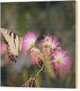 Kiss Of Butterfly Wood Print