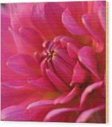 Kiss Of Pink Wood Print