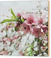 Kiss Of Spring Wood Print