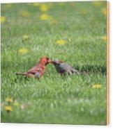 Kissing Cardinals Wood Print