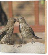 Kissing Cousins Wood Print