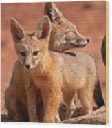 Kit Fox Mother Looking Over Pup Wood Print