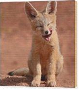Kit Fox Pup Mid-lick Wood Print